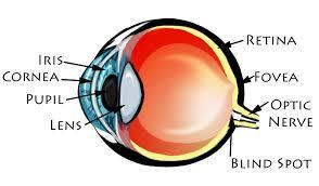 eye dia