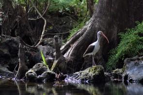 Hillsborough River Bird