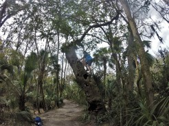 Hillsborough River Trail